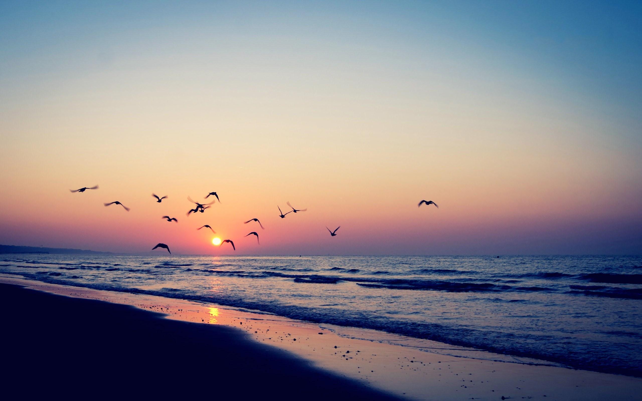 beach-sea-waves-sunset-birds-hd-wallpaper